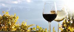 BARBERA D'ASTI SUPERIORE DOCG - 6 Flaschen Wein