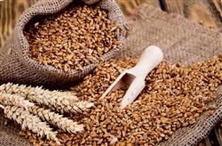 BIO Bio-Mehl von Hartweizengrieß Saragolla - Sack von 5 kg