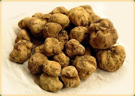 Whole SUMMER TRUFFLE Tuber aestivum Vitt. - 12 Packs of 20g